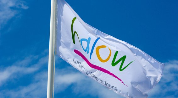 halow logo on flag.jpg