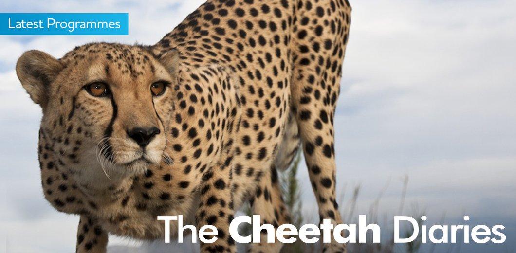CheetahDiariesBanner.jpg